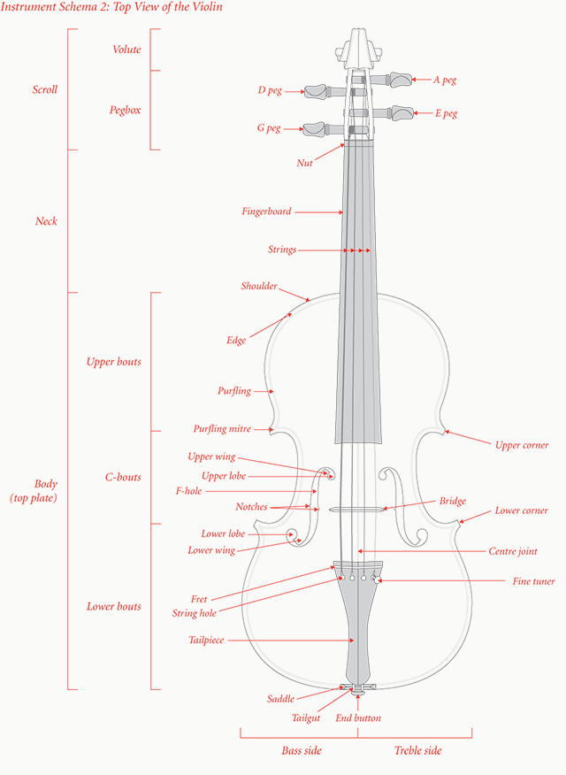 Instrument Schema 2: Top View of the Violin
